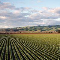 Revalúo bienes agrícolas